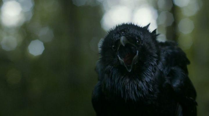 game_of_thrones_-_03x02_-_dark_wings_dark_words-720p-immerse_241115